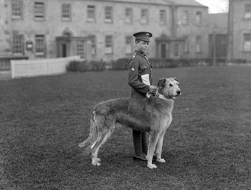 Características y razas de perros guardianes